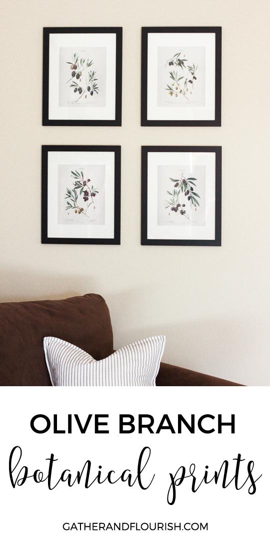 FREE printable olive branch botanical prints | Gather and Flourish